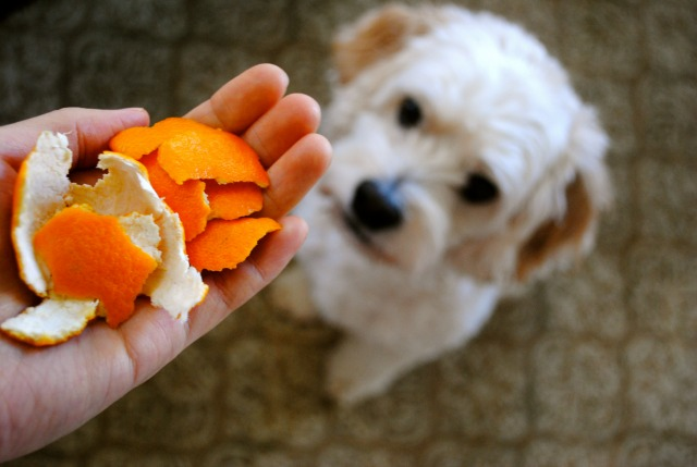 Simple Fix: Eat a Clementine. Smell nice.