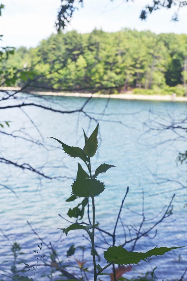 Mini Adventure: a Minimalist Pilgrimage to Concord