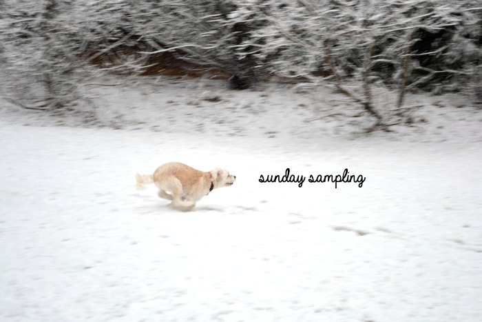 Sunday Sampling
