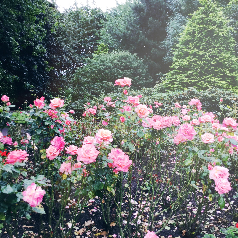 Secret Garden Sessions